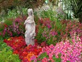 DISPLAY 5 - Schizanthus / Calceolaria  (1 of 7)